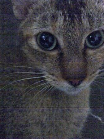 housecat3